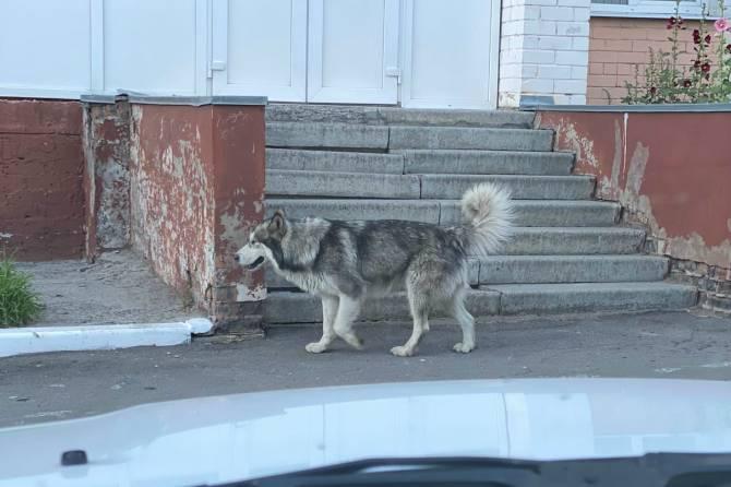 В Брянске ищут хозяев потерявшегося пса
