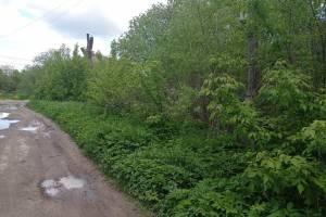 Ядовитый борщевик захватил улицу в Новозыбкове