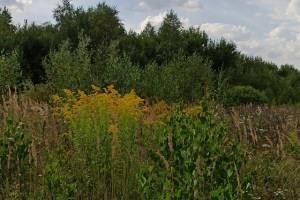 В Почепском районе собственника земли оштрафовали на 10 тысяч рублей
