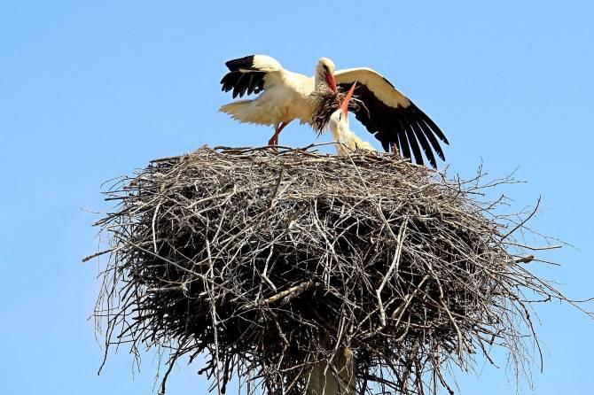 В Брянской области назвали победителей фотоконкурса «Под крышей дома моего»