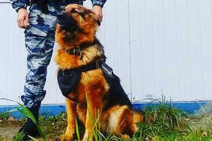 Служебные собаки помогли брянской полиции раскрыть два преступления