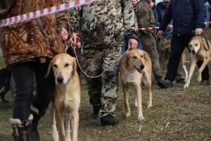 В Клинцах 13 марта состоится выставка охотничьих собак