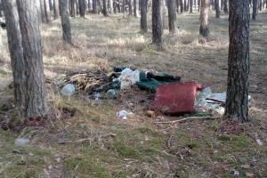 Брянцы пожаловались на горы мусора на станции Снежетьской