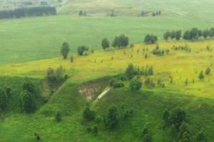 Сотрудники заповедника «Брянский лес» стали соавторами монографии о Меловицких склонах