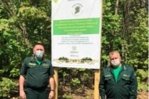 В Брянской области высадили больше 300 тысяч деревьев в память о Победе