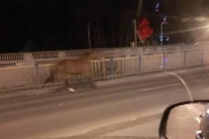 В Брянске одинокий конь устроил скачки посреди дороги