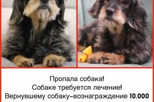 В Почепе нашедшему пропавшую собаку Марусю пообещали 10 тысяч рублей