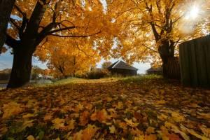 На следующей неделе на Брянщине сохранится аномальное для октября тепло