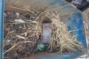 В Брянске дворники доставили лишние хлопоты мусоровозам