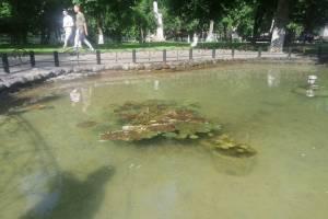 В Стародубе в пруду городского парка уничтожили экзотические лилии