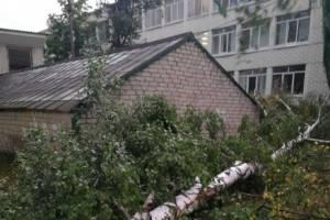 В Брянске во дворе школы №58 ветер обрушил два дерева
