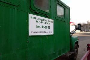 В Брянске на отлов и временное содержание бездомных собак выделят более 6 млн рублей