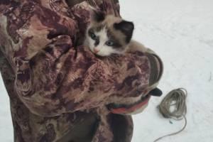 В Майском парке спасли сидевшего три дня на дереве котенка