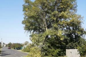 В Новозыбкове ветка рухнула на дорогу