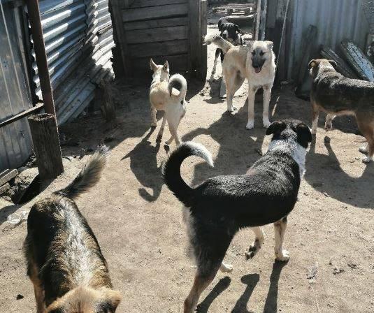 Женщина в Брянске собирает бродячих собак: соседи начали с ней войну