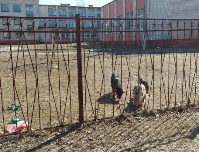 В Брянске бродячие собаки захватили дворы школы №52 и детсада «Василек»