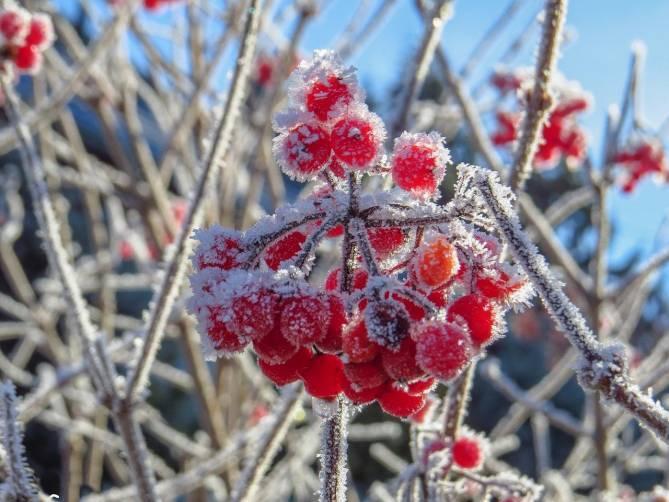 Брянцев предупредили о заморозках 10 и 11 мая