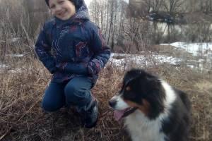 В Брянске списанной из МЧС собаке нашли новых хозяев