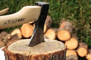 В Клинцах вырубят деревья на улице Калинина