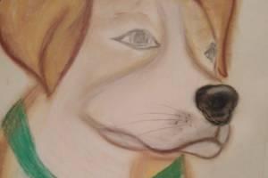 Арина Седнева из Брянской области стала призером конкурса рисунков о фронтовых собаках