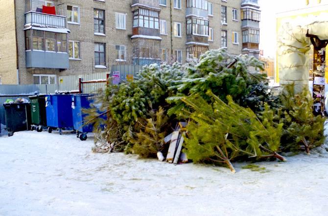 Жителям Брянска рассказали, что делать с новогодними елками