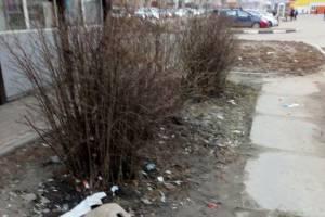В Брянске остановка возле госуниверситета утонула в мусоре