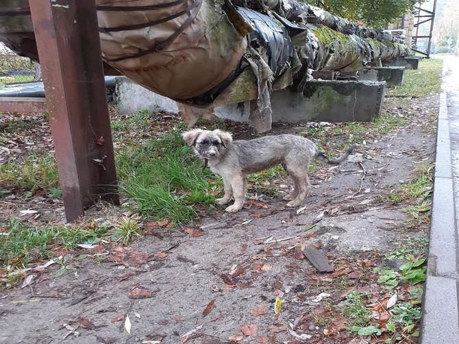 В Брянске через соцсети ищут хозяев потерявшейся собаки