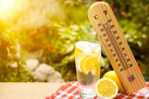 В Брянск на следующей неделе придет 30-градусная жара