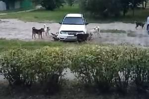 В Брянске собаки напали на припаркованный автомобиль