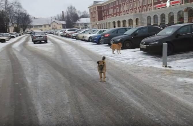 В Брянске возле БМЗ стая собак едва не загрызла пенсионера