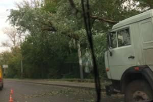 В Брянске убрали перегородившее улицу Калинина дерево