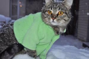 Во вторник на Брянщине ожидается 15-градусный мороз