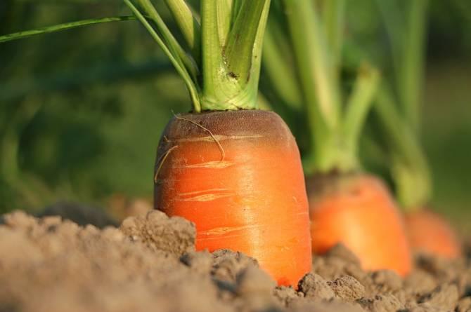 Брянская полиция раскрыла шесть краж урожая