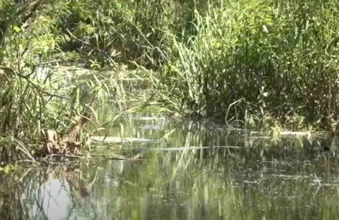 Разлившиеся Десна и Болва затопили приусадебные участки брянцев