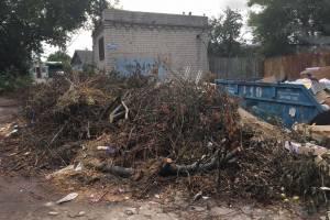 В Брянске мусорные контейнеры на Станке Димитрова завалили обрубленными ветками