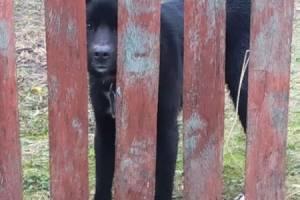 В брянском селе дворняга с ошейником разорвала женщине руки