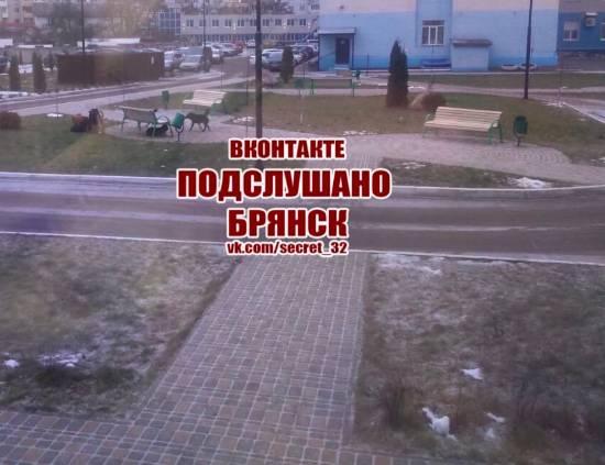 В Брянске бродячие собаки терроризируют пациентов горбольницы №1