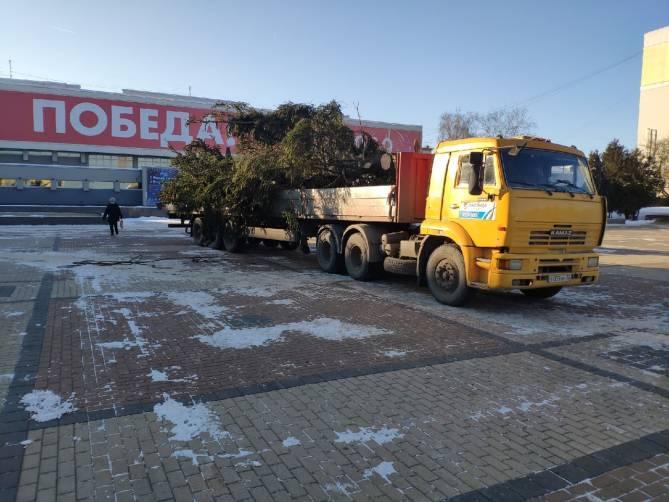 В Брянске на площади Партизан начали установку новогодней ели