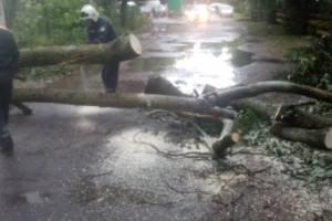 МЧС: Пронесшийся над Брянском ураган повалил 15 деревьев