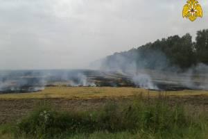 Под Почепом у дороги подожгли огромное поле