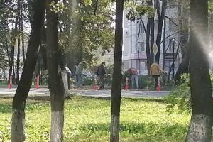 В Брянске водители освободили дорогу от упавшего дерева