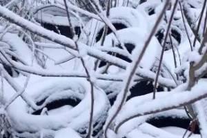 В Брянске от чиновников потребовали убрать свалку в Володарском районе