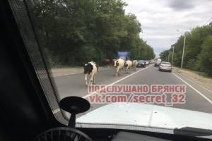 В Брянске стадо коров перекрыло движение на улице Речной