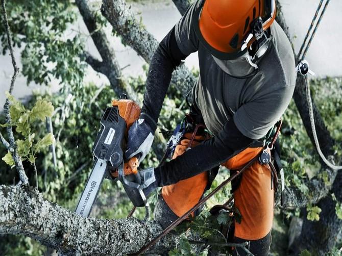 Брянская полиция ответила активистке Жильниковой за спил деревьев