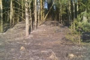 В Карачевском районе два часа тушили лесной пожар