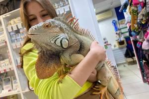 Удивившую брянцев рептилию зовут Яша