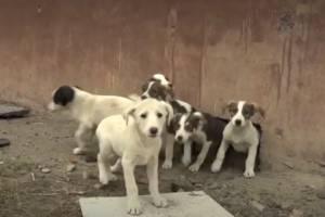 В брянском подвале поселились два десятка щенков