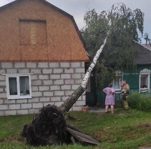 В Брянске на Володарке ураган повалил дерево на частный дом