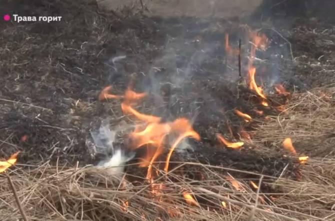 Брянцам грозит уголовная ответственность за палы сухой травы