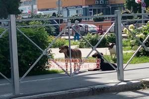 В центре Брянска 6 бродячих собак напали на ребенка